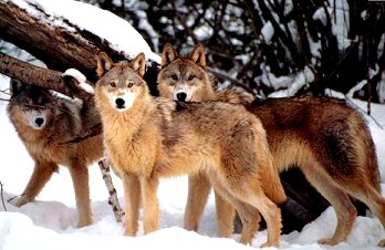 Wolf Numbers