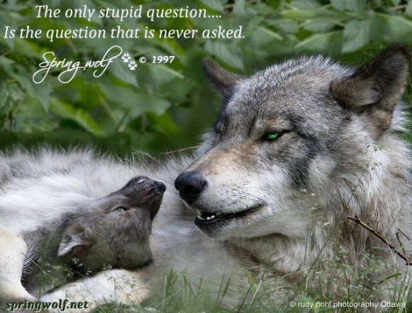 Quotes By Springwolf 🐾 © 1997