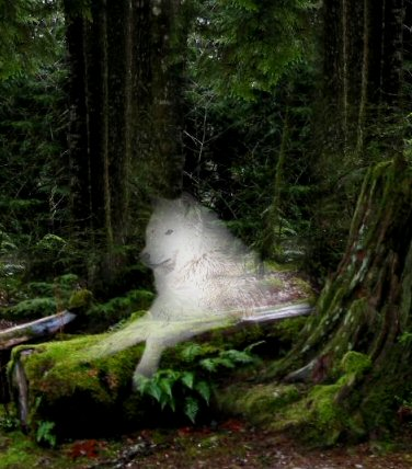 © 2012 Springwolf Wolf Ghost