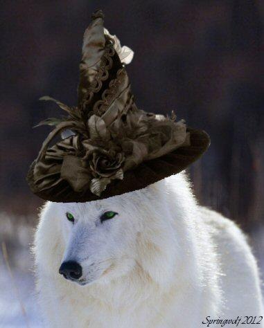 Wolfwitch by Springwolf 2012
