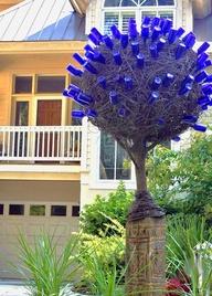 bluebottletree2