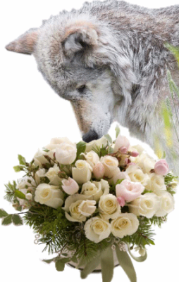 Our Deepest Sympathies & Prayers ~ by Springwolf