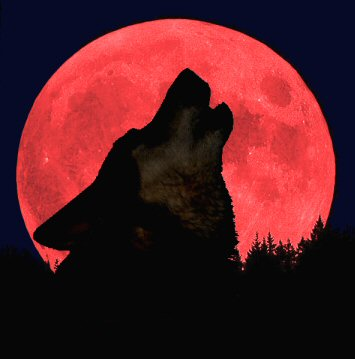 Merlin's Blood Moon by Springwolf 🐾