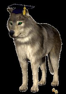 Graduating Wolf2 By Springwolf ©  🐾