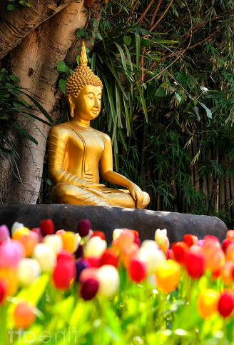 Meditation Buddha Statue In Tulips Garden Under The Bodhi Tree