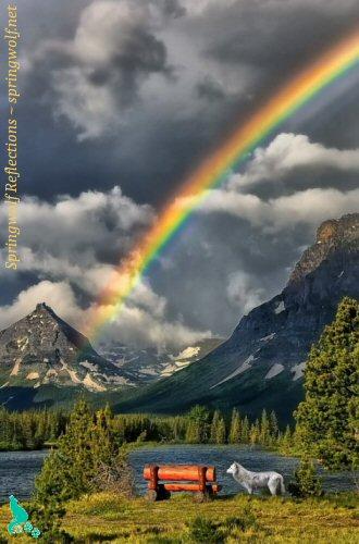 wolf-rainbow
